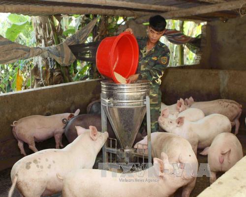 Một số giải pháp ổn định phát triển chăn nuôi