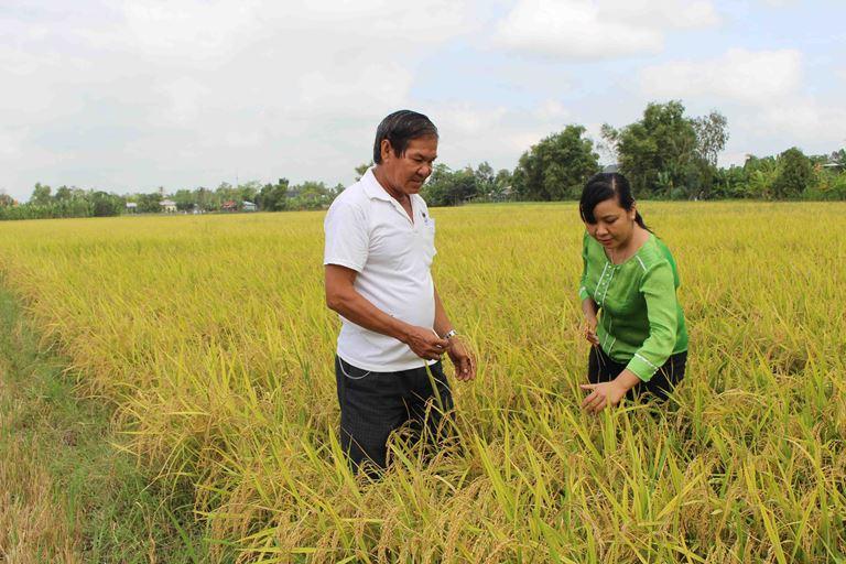 Ngành lúa gạo An Giang với yêu cầu tái cơ cấu