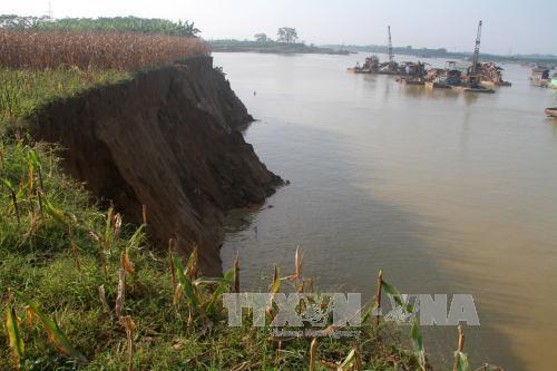 Sạt lở nghiêm trọng bờ sông Thao