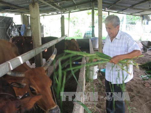 Mở hướng đi mới, giúp nông dân chuyển đổi cây trồng, phát triển kinh tế