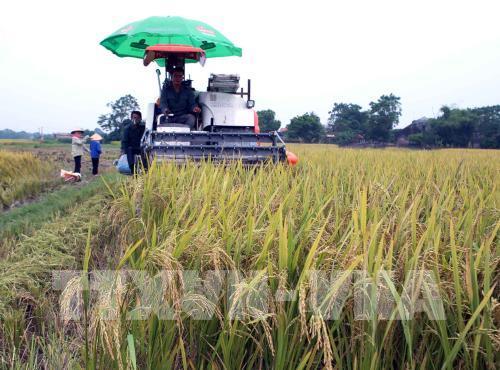 Cà Mau tái cơ cấu nông nghiệp gắn với xây dựng nông thôn mới