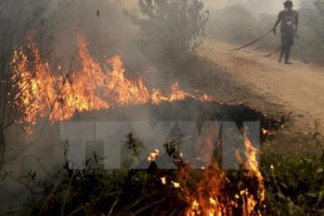 Cháy rừng nghiêm trọng ở miền Bắc Trung Quốc