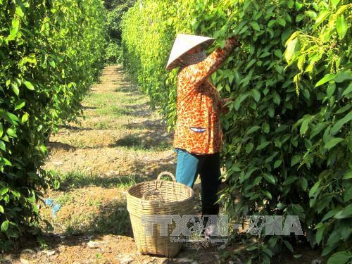 Kiên Giang ưu tiên phát triển công nghiệp chế biến nông sản xuất khẩu