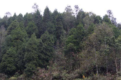 Tăng cường các giải pháp bảo vệ rừng