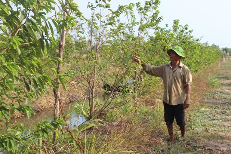 Tiền Giang: Triển khai chuyển dịch cơ cấu, mùa vụ cây trồng nhằm thích ứng với biến đổi khí hậu