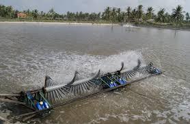 Cà Mau thực hiện nhiều giải pháp phát triển nghề nuôi tôm