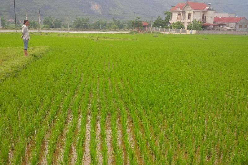 Nghệ An gắn giảm nghèo với xây dựng nông thôn mới