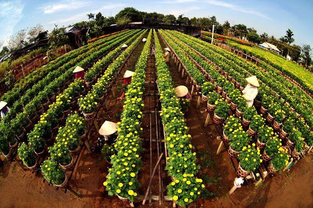 Đồng Tháp phát triển nghề trồng hoa cảnh công trình