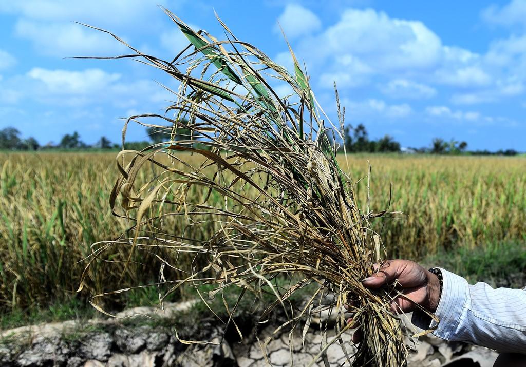 Tiền Giang: Giảm thiểu nguy cơ hạn mặn gây hại