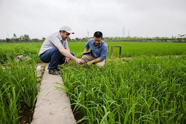 Nhiều loại sâu bệnh hại lúa tăng so với cùng kỳ năm ngoái