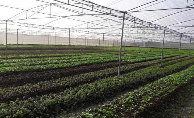 Bắc Giang phấn đấu có thêm 18 xã đạt chuẩn nông thôn mới