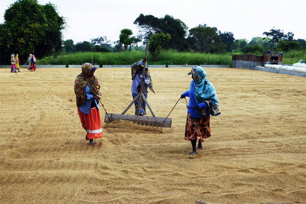 Thời tiết khắc nghiệt đe dọa an ninh lương thực ở Sri Lanka