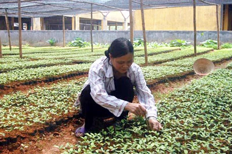 Hà Giang: Tập trung phát triển các chương trình lâm nghiệp trong năm 2017