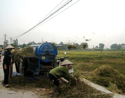 Thời tiết và dịch bệnh làm ảnh hưởng tới năng suất lúa