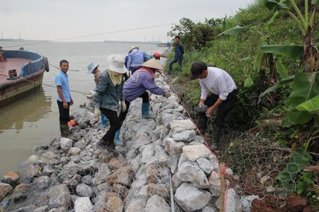 Hưng Yên tu bổ đê tả sông Hồng phòng chống bão lũ
