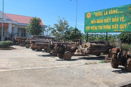 Phát hiện nhiều sai phạm tại Ban Quản lý rừng phòng hộ Bắc Biển Hồ, Gia Lai