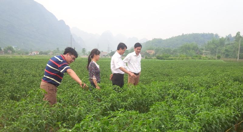 Ngân hàng Thế giới hỗ trợ Việt Nam phát triển khu vực nông thôn