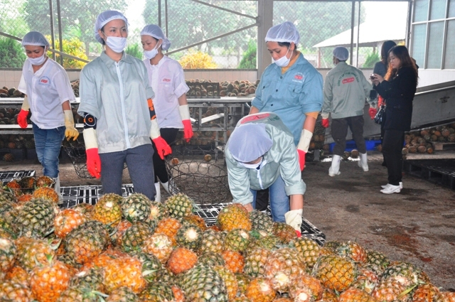 Xuất khẩu hàng rau quả tăng mạnh trong nửa đầu năm 2017