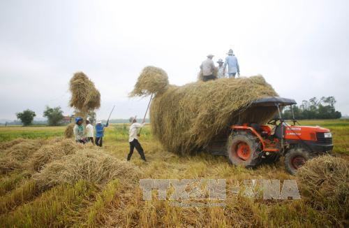 Vĩnh Phúc: Cơ giới hóa trong thu hoạch giúp xử lý triệt để nguồn rơm rạ