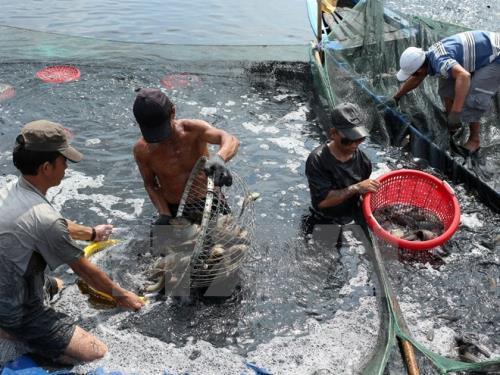 Thủy sản Đắc Lộc xây dựng Trung tâm giao dịch thủy sản