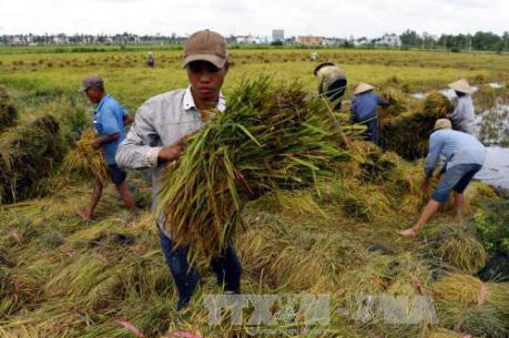 Trà Vinh hỗ trợ nông dân phòng trị bệnh đạo ôn lá trên cây lúa