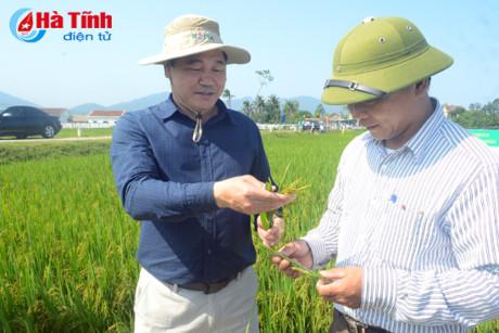 Hà Tĩnh hỗ trợ gần 34 tỷ đồng cho nhân dân thiệt hại trong vụ Xuân 2017