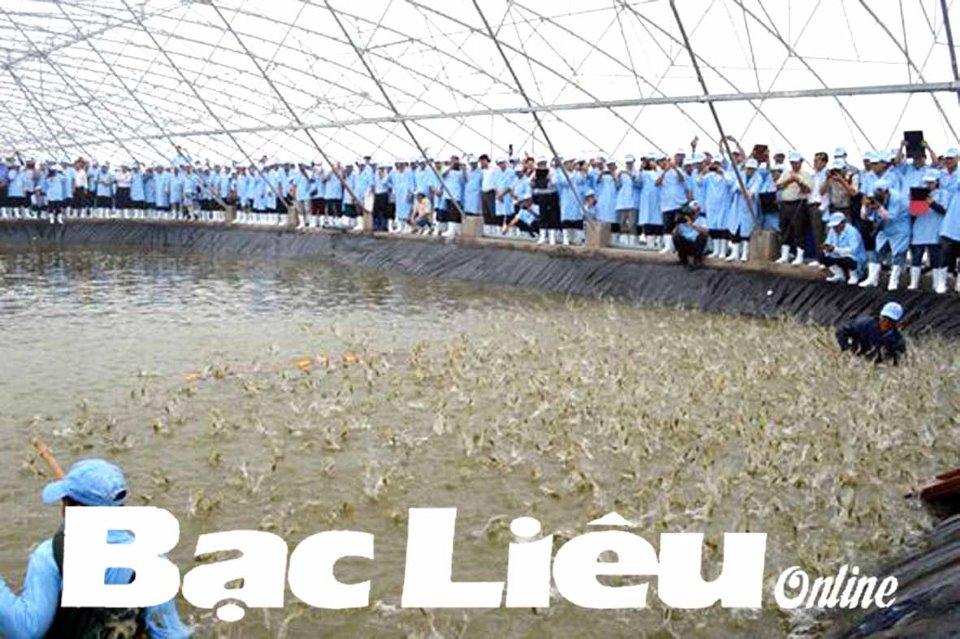 Ứng dụng công nghệ cao trong nuôi tôm: Đưa Bạc Liêu trở thành trung tâm ngành công nghiệp tôm