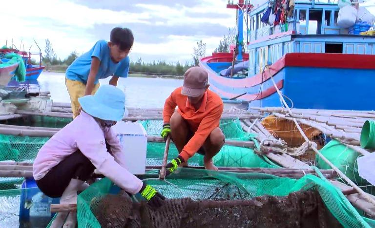 Cá nuôi lồng bè chết hàng loạt ở Phú Yên là do mật độ nuôi quá dày