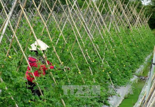 """Nông nghiệp công nghệ cao : """"Mở khóa"""" giá trị vùng đất khó"""