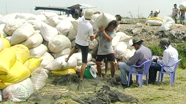 Hợp tác xã nông nghiệp thực hiện tốt đề án tái cơ cấu nông nghiệp