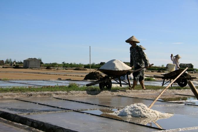 Thời tiết diễn biến phức tạp làm sản lượng muối đạt thấp