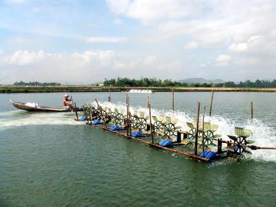 Nuôi trồng thủy sản 6 tháng/2017 tăng 6,7% so với cùng kỳ năm trước
