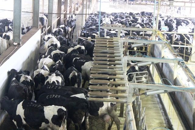Nâng cao chất lượng sản phẩm ngành chăn nuôi