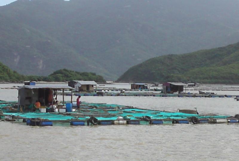 Ứng dụng công nghệ cao trong nghề nuôi cá lồng trên biển