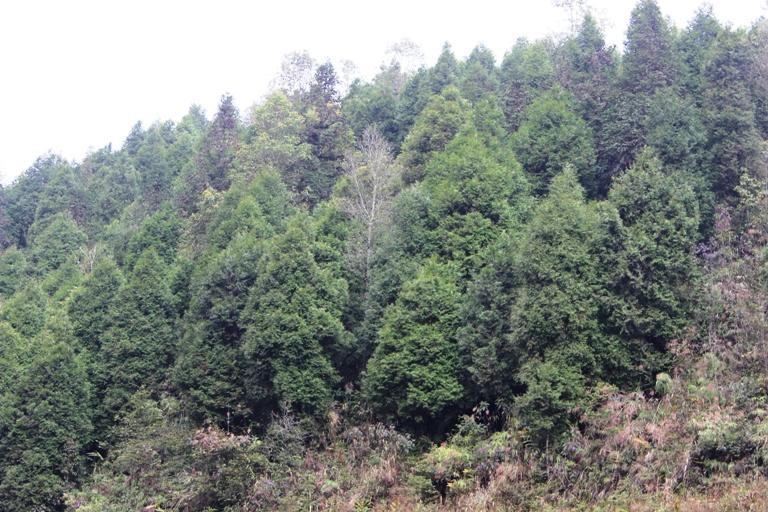 Khuyến cáo sản xuất lâm nghiệp theo mùa vụ trồng rừng