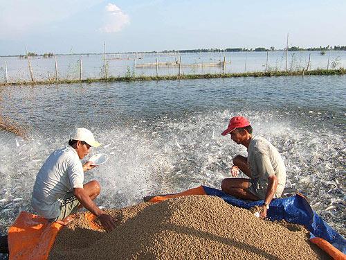Kéo dài thời gian lưu hành sản phẩm thức ăn chăn nuôi, thủy sản