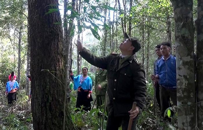 Tăng cường sự lãnh đạo của Đảng đối với công tác quản lý, bảo vệ và phát triển rừng