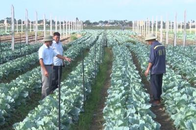 Điểm sáng trong phát triển nông nghiệp ứng dụng công nghệ cao ở Ninh Bình