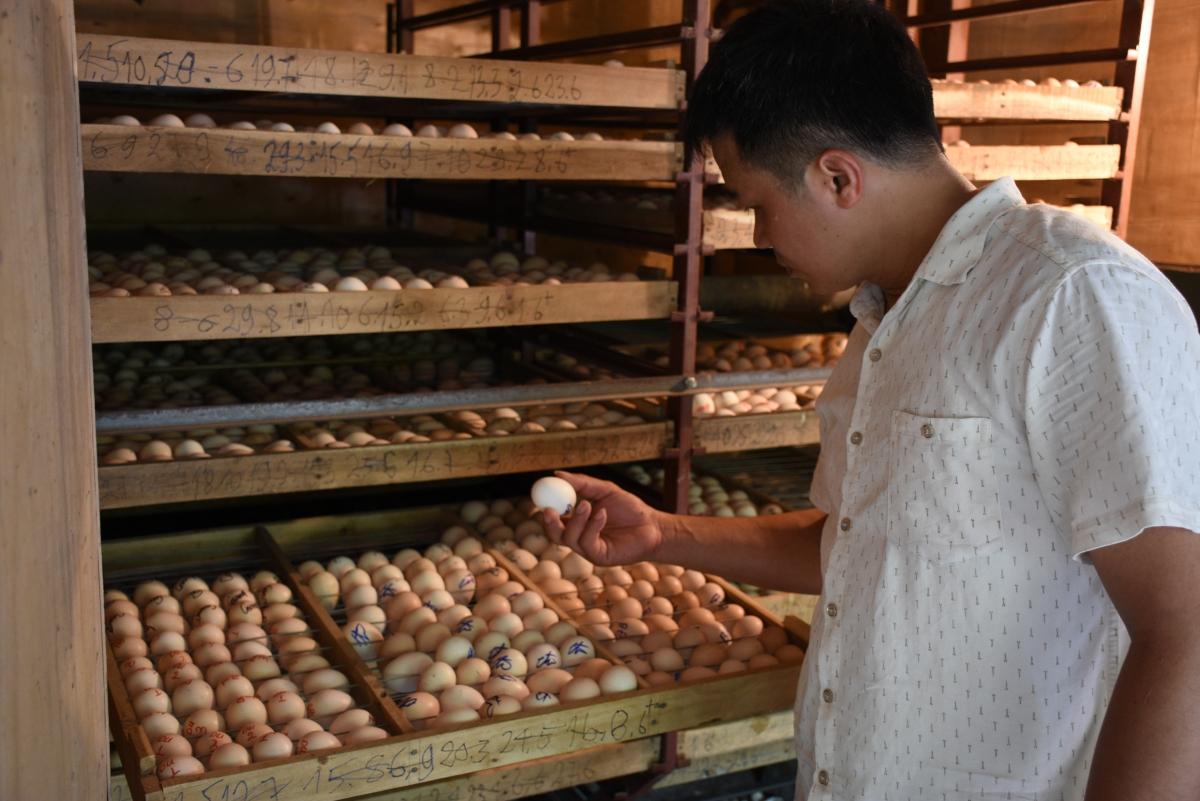 Bí quyết nuôi gà chất lượng của chủ nhiệm HTX gà Đông Tảo