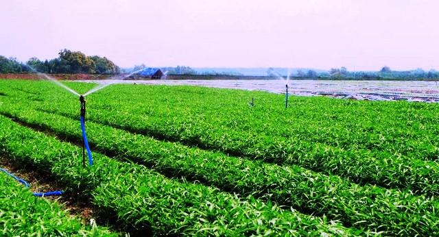Yên Bái: Hiệu quả cao từ ứng dụng khoa học công nghệ trong sản xuất nông nghiệp