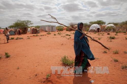 Liên hợp quốc kêu gọi hỗ trợ Ethiopia đối phó với hạn hán