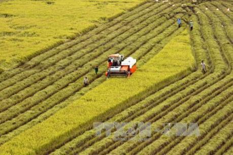 Nghệ An phát triển hiệu quả các dịch vụ nông nghiệp
