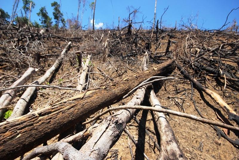 Bước đầu xác định đối tượng phá rừng tại Quảng Nam