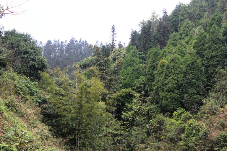Điều tra, xử lý nghiêm các hành vi phá rừng tự nhiên