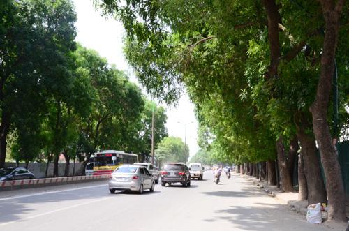 Hà Nội: Dịch chuyển 130 cây xanh phục vụ thi công ga ngầm đường sắt đô thị