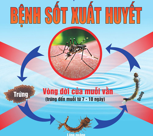 Cần tiếp tục tăng cường các biện pháp phòng ngừa, ngăn chặn dịch sốt xuất huyết