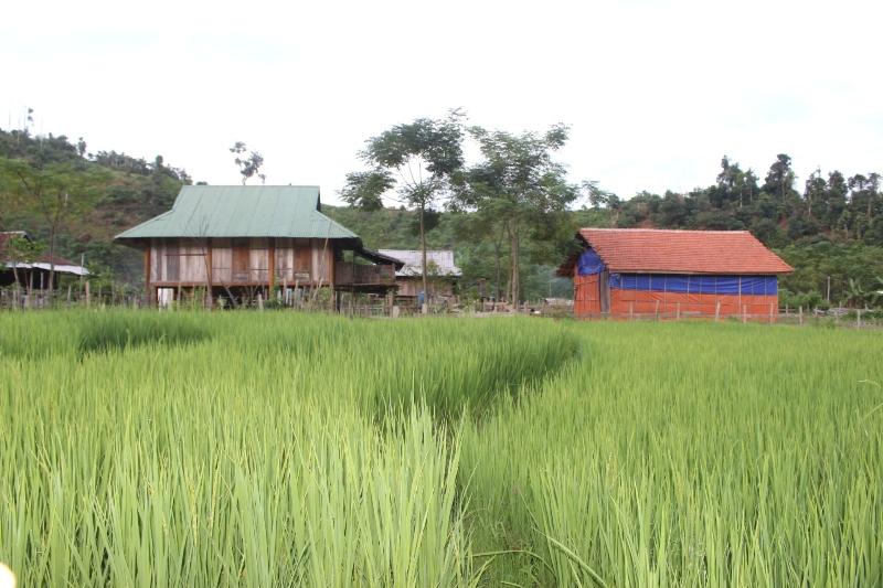 Ngày mới ở Nghĩa Đô (Bảo Yên, Lào Cai)