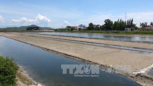 Diêm dân Khánh Hòa kết thúc vụ muối trong thua lỗ