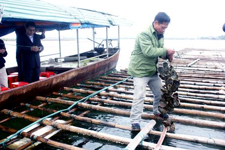 Tăng cường phối hợp công tác giữa ngành nông nghiệp và Hiệp hội nuôi biển Việt Nam