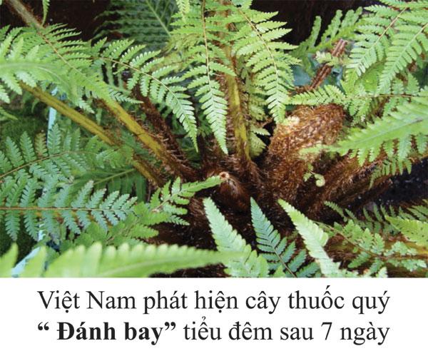 """Việt Nam phát hiện cây thuốc quý """"Đánh bay"""" tiểu đêm sau 7 ngày"""